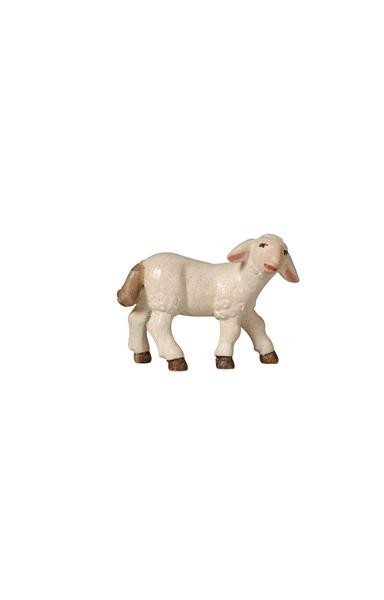 PEMA Lamb Standing Looking Right