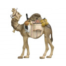 Alp Camel with luggage color