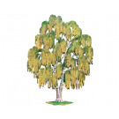 Weeping Willow Tree in Fall