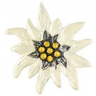Edelweiss -Large   (2.0 inch)