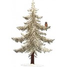 Pine with Owl- Winter