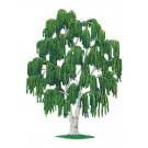 Weeping Willow Tree- summer